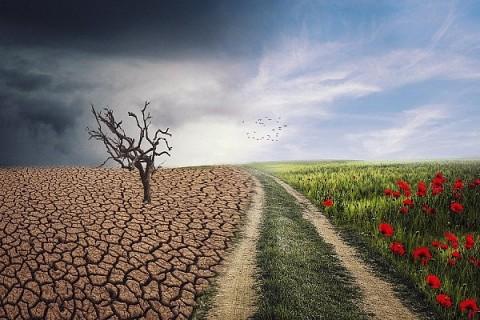 Emprendimiento para cuidar el medioambiente